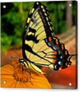 Breakfast At The Gardens - Swallowtail Butterfly 005 Acrylic Print