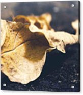Breaks Of Autumn Acrylic Print