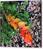Breath Of Spring Acrylic Print