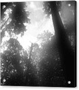 Breathing Trees Acrylic Print