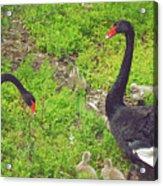 Breeding Pair I Acrylic Print