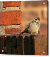 Brick And Bird Acrylic Print