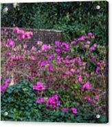 Brick Wall And Azalea Acrylic Print