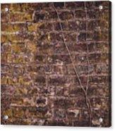 Vine Up A Brick Wall  Acrylic Print