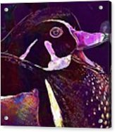 Bride Duck Male Duck Bird  Acrylic Print