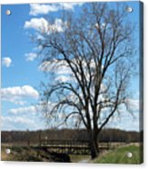 Bridge And A Tree Acrylic Print