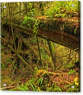 Bridge In The Rainforest Acrylic Print