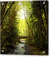 Bridge In The Rainforest Acrylic Print