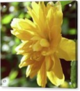 Bright As Yellow Acrylic Print