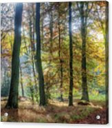 Bright Autumn Morning Acrylic Print
