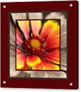 Bright Blanket Flower With Design Acrylic Print