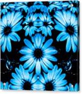 Bright Blue Daisies Acrylic Print