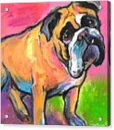 Bright Bulldog Portrait Painting  Acrylic Print
