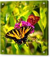 Bright Butterflies Acrylic Print