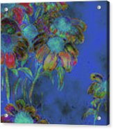 Bright Daisies In Blue Acrylic Print