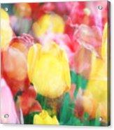 Bright Dreams In The Tulips Acrylic Print