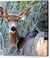 Bright Eyes Acrylic Print