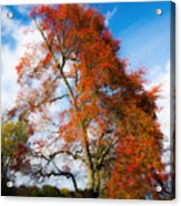 Bright Fall Colors Acrylic Print