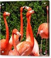 Bright Flamingos Acrylic Print