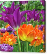 Bright Floral Acrylic Print