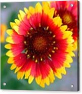 Bright Floral Day Acrylic Print