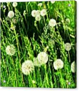 Bright Grass 2 Pd2 Acrylic Print
