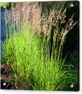 Bright Green Grass By The Pond Acrylic Print