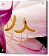 Bright Lily Acrylic Print