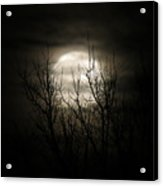 Bright Night Acrylic Print
