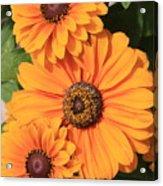 Bright Orange Flowers  Acrylic Print