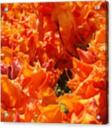 Bright Orange Rhodies Art Prints Canvas Rhododendons Baslee Troutman Acrylic Print