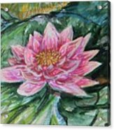 Bright Pink Waterlily Acrylic Print