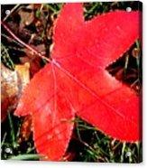 Bright Red Acrylic Print