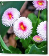 Bright Spring Flowers  Acrylic Print