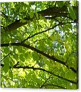 Bright Treetop  Acrylic Print