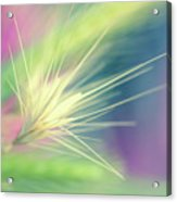 Bright Weed Acrylic Print