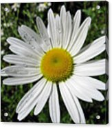 Bright White Flower With Water Droplets Acrylic Print