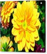 Bright Yellow Dahlia Flower Acrylic Print