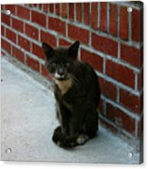 Brighton Cat Acrylic Print