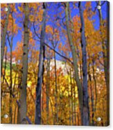 Brilliance Of Fall Acrylic Print by Barbara Schultheis