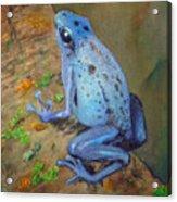 Brilliant Blue Poison Dart Frog Acrylic Print