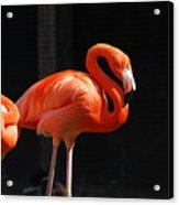 Brilliant Pink Flamingo Acrylic Print