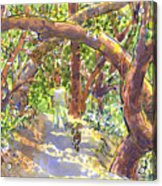 Briones Forest Near Springhill Road Acrylic Print