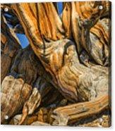 Bristle Cone Pine Tree White Mtns Ca Color Img 6799 Acrylic Print