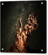 Bristlecone Nights Acrylic Print