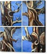 Bristlecone Tree Set Acrylic Print