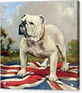 British Bulldog Acrylic Print
