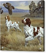 Brittany Spaniels Flush Three Birds Acrylic Print