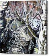 Briza Belokora Acrylic Print
