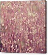Briza Media Limouzi Decorative Quaking Grass Acrylic Print